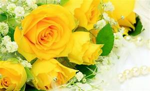Stunning Yellow Roses Natural Beauty Images - HD Wallpapers