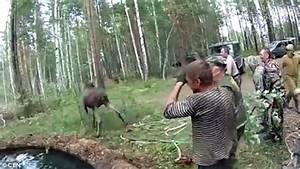 Video shows group of walkers use ropes to save elk from ...