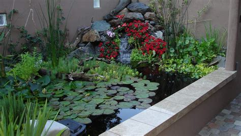 pond edge transition garden pond forums