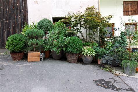 Schöne Pflanzen Für Die Terrasse by Pflanzen F 252 R Die K 252 Belbepflanzung K 252 Belpflanzen F 252 R Den