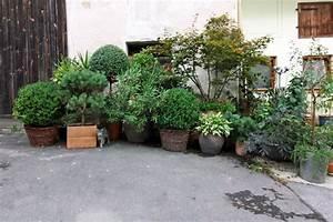 pflanzen sichtschutz terrasse k bel genial balkon With pflanzen sichtschutz terrasse kübel