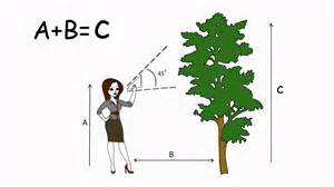4 ways to measure the height of a tree wikihow