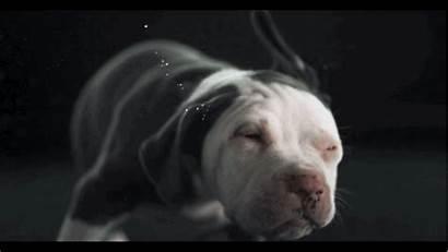 Dog Gifs Shake Shaking Dogs Water Speed