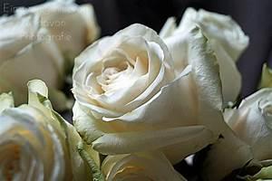 Hohe Pflanzkübel Für Rosen : flowers f r dich soll 39 s wei e rosen regnen ~ Whattoseeinmadrid.com Haus und Dekorationen
