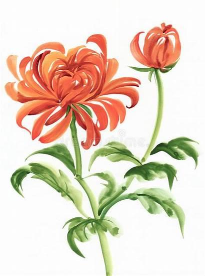 Chrysanthemum Watercolor Painting Asian Orange Flowers Chinese