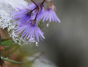 PicturesPool: Beautiful Flowers with Rain Water Drops