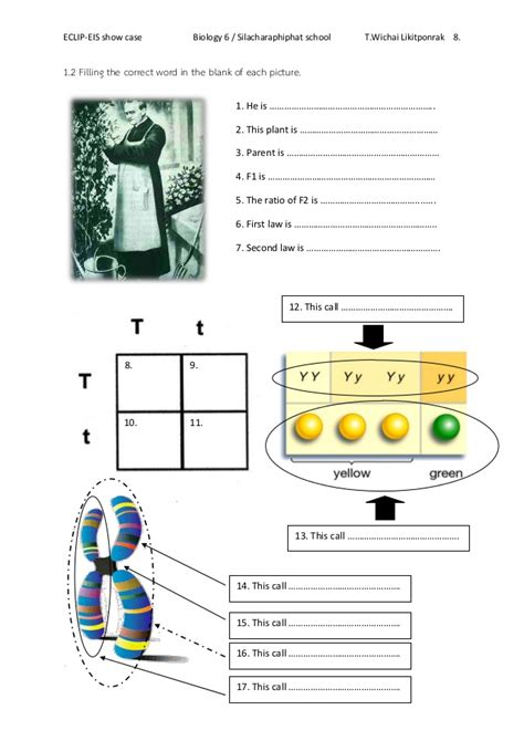 collection of mendel worksheet bluegreenish