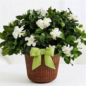 Plantas De Interior Con Flor, Plantas De Interior Con Flor