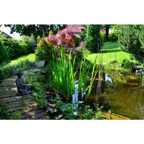 bassin de jardin pour poissons quelles sortes comment