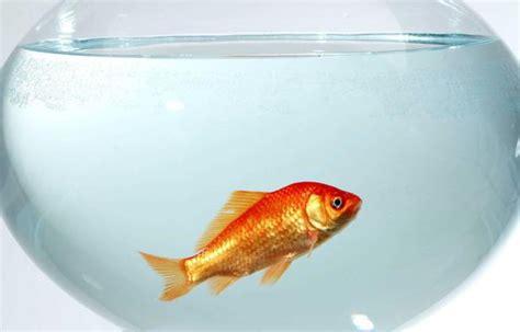 bocal poisson