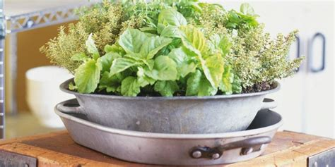 Grow A Winter Herb Garden