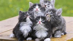 Cute Kittens - Babies Pets and Animals Wallpaper (16731287 ...