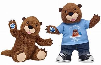 Bear Groundhog Build Plush Stuffed Animal Released