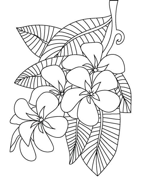 frangipani coloring page floral coloring pages