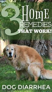 dog diarrhea remedy