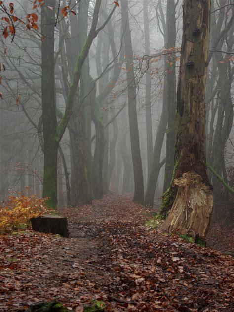 nebel im november pirand 238 ls im nebel