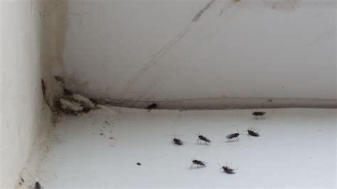 Flying Ants In Bathroom Window by 14249861188011526136303 Original