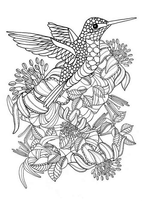 Coloring Pages Of Hummingbirds Hummingbird Printable Coloring Pages Digital By