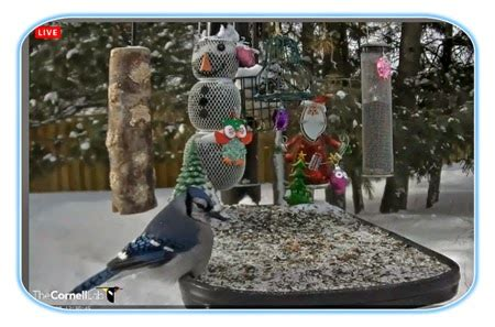 curiosity for birds live bird feeders as it happens