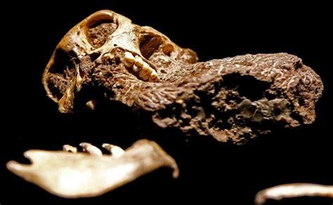 Lubanja najmanjeg dinosaura očuvana u jantaru starom 99 ...