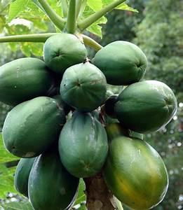 Health Benefits Of Eating Papaya Fruit