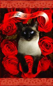 Valentine Greeting Cards: Valentine Cat Cards