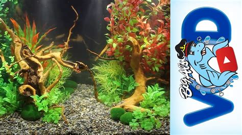 How To Make Aquascape by How To Use Aquarium Plants To Create Stunning
