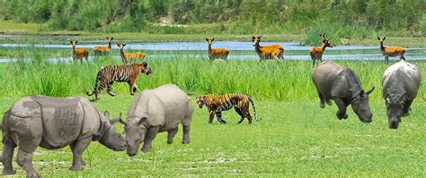 Jungle Safari - StarTravelCompany