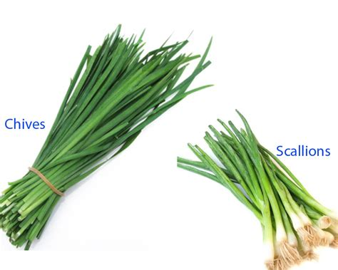 what is a scallion chives vs scallions thosefoods com