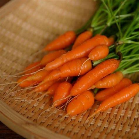 แครอทจิ๋ว - Little Finger Carrot   Shopee Thailand