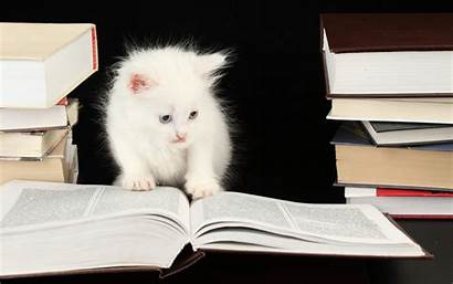Cat Studying 1694 Wallpaperup Wallpapers