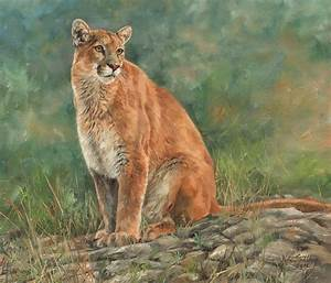 Mountain Lion Painting by David Stribbling