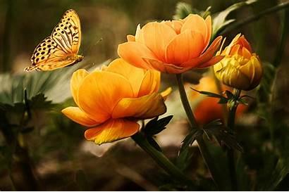 Flower Pexels Nature Flowers Garden Butterflies