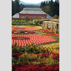 Fall Mums And Colors In The Walled Gardens At Biltmore