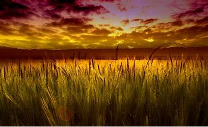 Field Sunset Wheat Colorful Wallpapers Backgrounds Desktop
