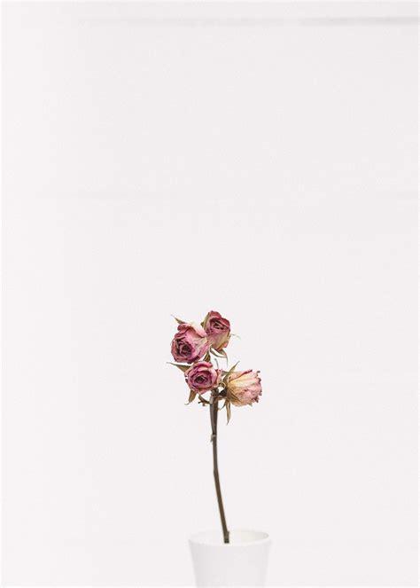 20+ Free Flower Pictures on Unsplash