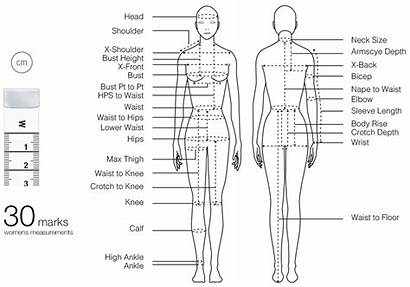 Measurements Measurement Measure Tape Fashionary Chart Figure