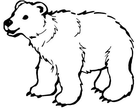 disegni da colorare di siamo orsi animali orso