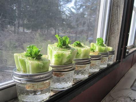 10 x groente die je na gebruik verder laat groeien famme
