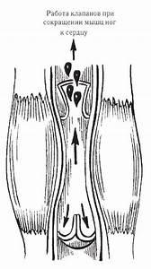 Валокордин и гипертония