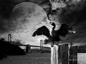 Night Of The Cormorant . Black And White Photograph by ...