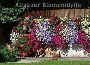 Blumenkästen Bepflanzen Sonnig : die 25 besten ideen zu balkonk sten bepflanzen auf pinterest terrasse bepflanzen pflanzk bel ~ Frokenaadalensverden.com Haus und Dekorationen
