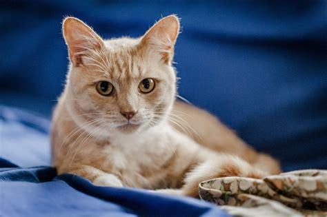 Cat Flu  Symptoms, Causes, And Treatment Of Cat Flu