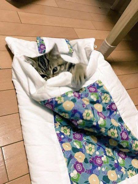 cute cat tucked  bed luvbat