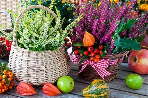 Herbst Blume Im Garten by Blumen Peters Gartenpflege Im Herbst