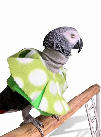 Poncho Bird Plucking Parrots Collar Neck Parrot