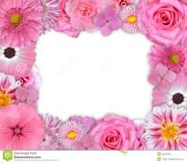 blumen design blumen rahmen rosa purpurrote blumen auf weiß stockbilder bild 29812264