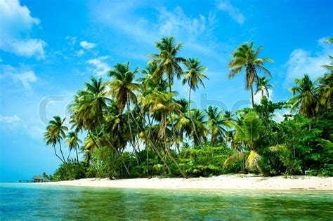 tropical island landscape pictures of islands with palm trees www imgkid com the image kid has it