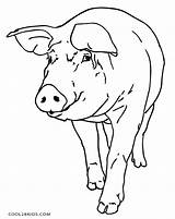 Pig Coloring Pages Pigs Printable Flying Way Ducklings Cool2bkids Getcolorings sketch template