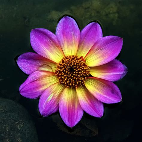 yellow and purple yellow and purple by augenweide on deviantart